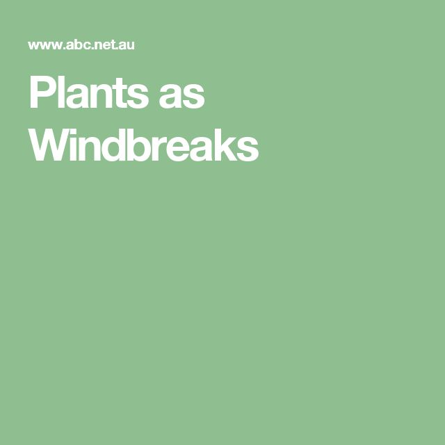 Plants as Windbreaks