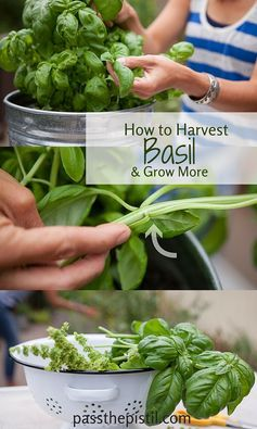 Best 25+ Herb Pots Ideas Only On Pinterest | Diy Herb Garden, Growing Herbs  Indoors And Garden Pots Ideas Diy