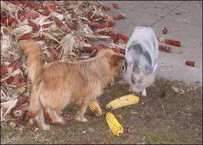 Szánter blogja.: Állatfotók ma.