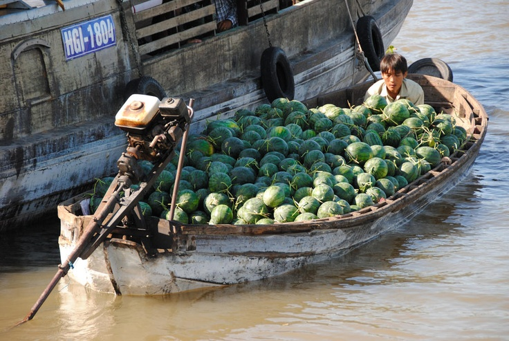 Photo of the Day - #Lifetime #Supply of #Watermelons - #Mekong #Delta, #Vietnam - Floating on a tour through a local market on the Mekong Delta in southern Vietnam, our group passed by this overflowing boat full of watermelons. Looking back at this picture I've always wondered how the guy at the front of the boat planned to make his way past all of the watermelons to the engine at the back of the boat. Photo from #absolutevisit at www.absolutevisit.com - all images Creative Commons…