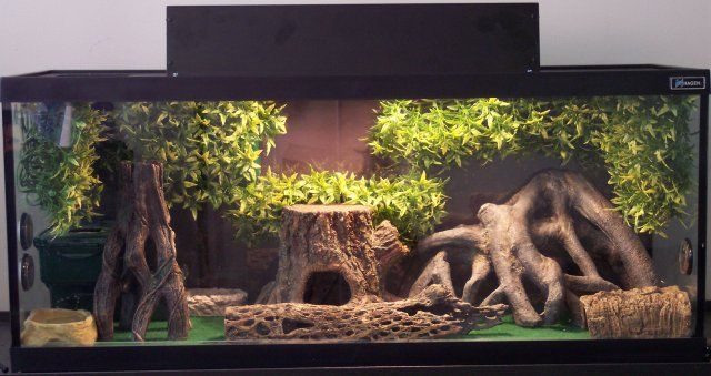 terrarium | Here is my 27 gallon Terrarium for my Various Leopard geckos .