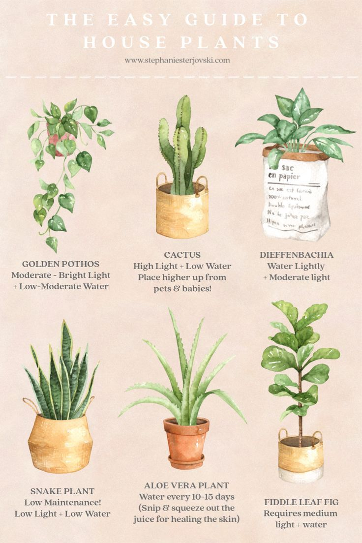 Precious Tips For Outdoor Gardens In 2020 Plants House Plant