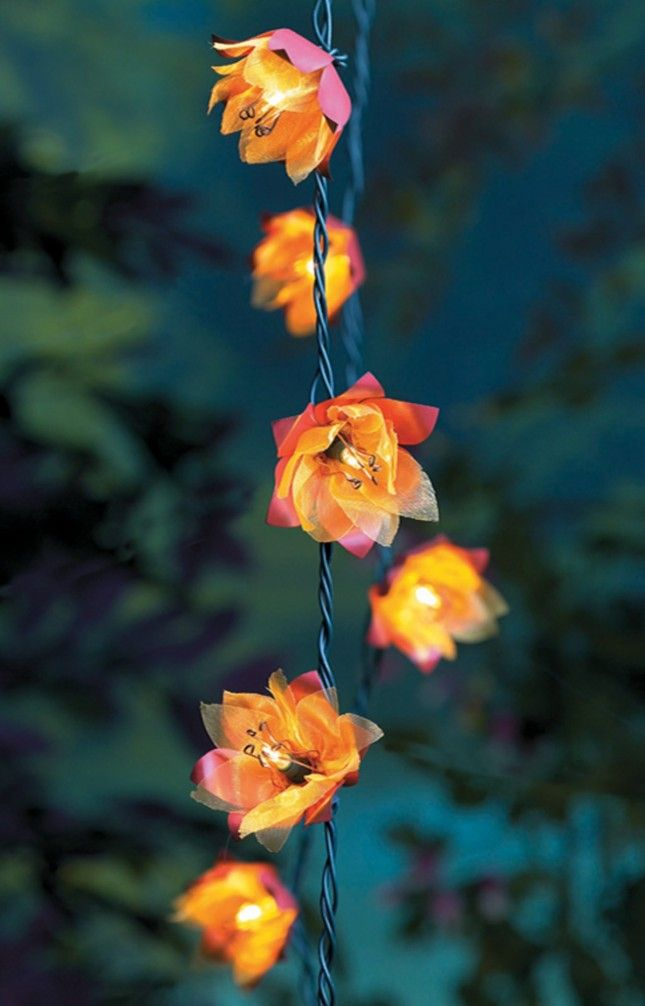 Flower String Lights Outdoor : 15 Outdoor String Lights to Set the Mood Orange flowers, You think and The o jays