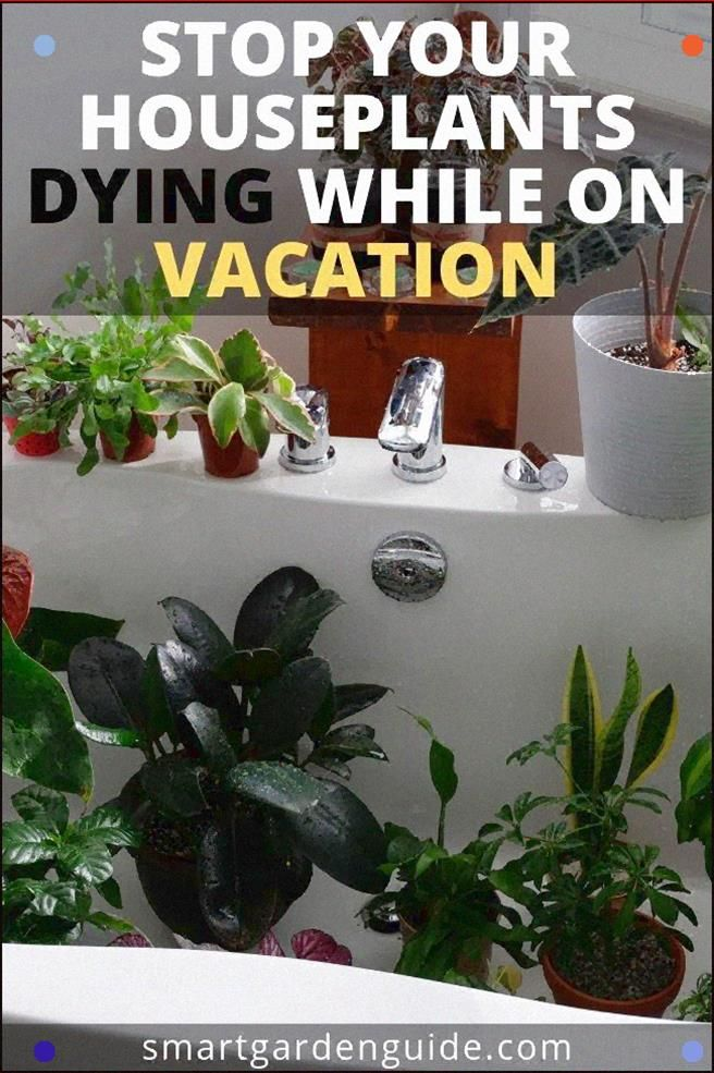 How To Water Indoor Plants While On, How To Care For Houseplants While On Vacation