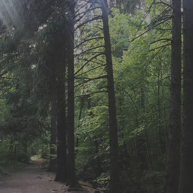 #naturelovers #natural #slowelife #minimalism#click_vision #transfer_visions #photo_collective #tress #mymoment #lifestyle #lifefolk#natureloversgallery #naturelovers #photoofthedays #live_nature #tv_living #tv_stilllife #liveauthenic #outsaid #cameramama#exklusive_shot #ig_naturelovers #visualsoflifes #visualsgang #visualsoflife#myvision#forrest t #forest#mwc_343