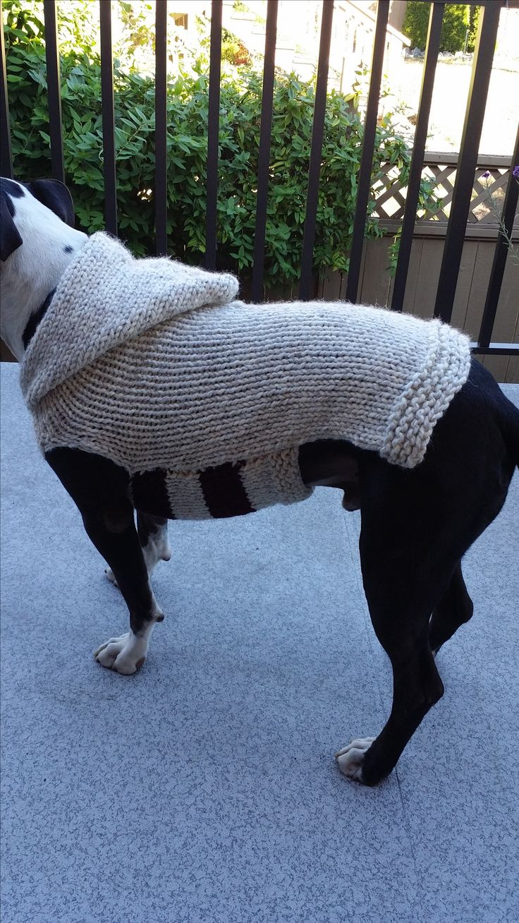 Best 25 dog sweater pattern ideas on pinterest dog coat pattern a specialized pattern for dogs with a big beautiful chest bankloansurffo Gallery