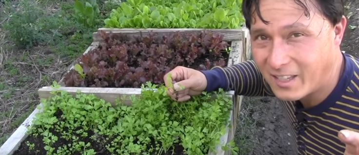 17 best images about homesteading on pinterest survival - Best vegetable garden soil amendments ...