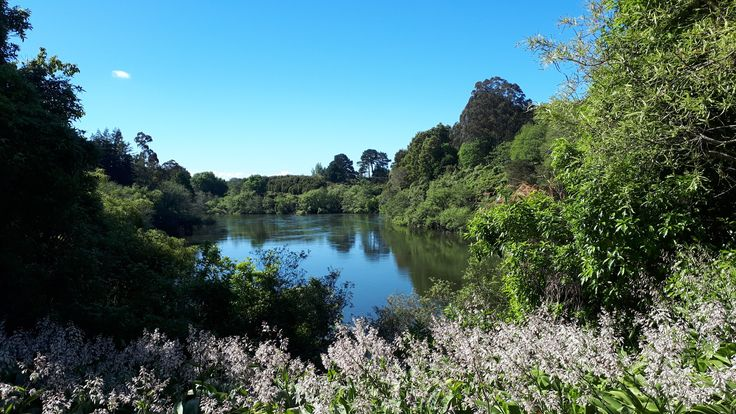 View of Waikato river from Hamilton Gardens.