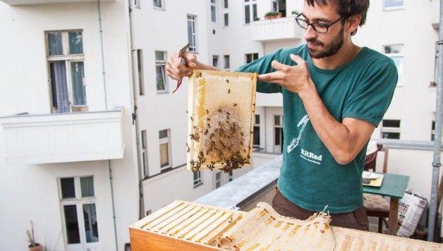 """Blumen, Tomaten, Bohnen.... Pah!   SOS an alle Hobbyimker: Bienen halten. Auf dem eigenen Balkon. Und eigenen Honig ernten.   Die Aktion """"Stadtbienen.org"""" bietet sogar Bienenkästen für den Balkon an...."""