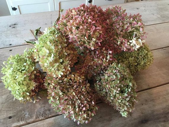 Large Dried Hydrangea Bouquet / Large Bunch Hydrangea's / Naturally Preserved Hydrangea's / Dried Floral's / Limelight Hydrangea's