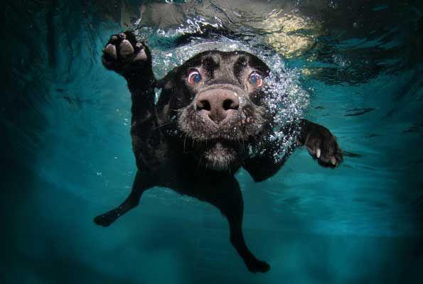 omg: Animals, Pets, Funny, Underwater Dogs, Seth Casteel, Photography, Underwaterdogs