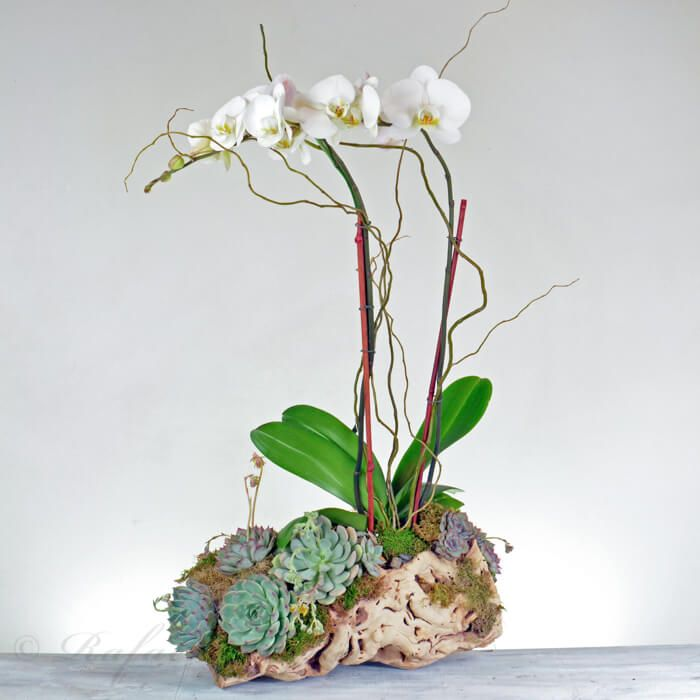 You Are Being Redirected Unusual Plants Orchid Flower Arrangements Plants