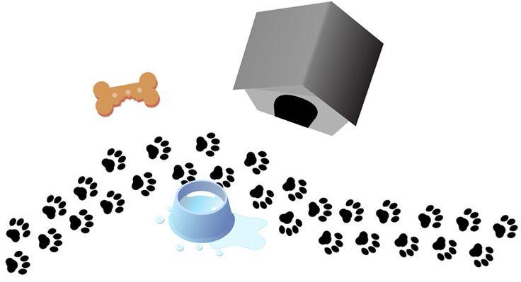 .: Dog Jacket, Frosting, Cross Saint, Labrador Retrievers, Black Labrador, Dog Treats, Animal