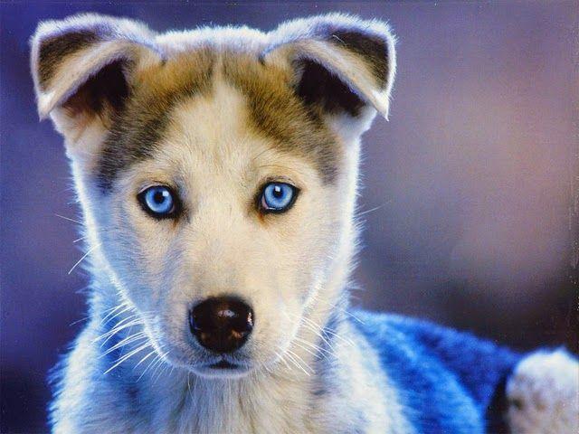 Most beautiful dog breed - photo#24