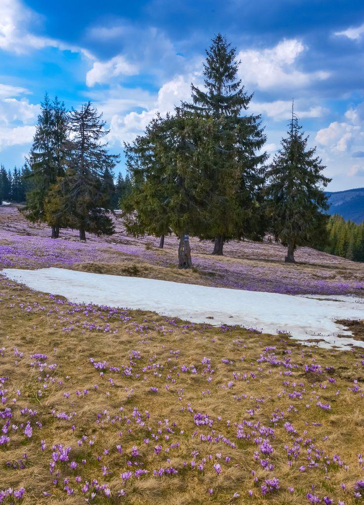 Spring time by Zsolt Szatmári on 500px