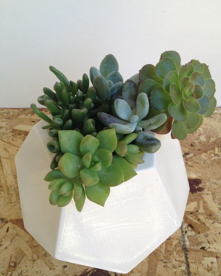 Dodecahedron Planter by Andrea Luna Reece