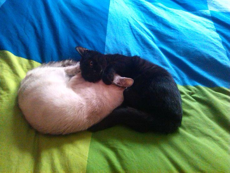 Ying & Yang a lo #gato