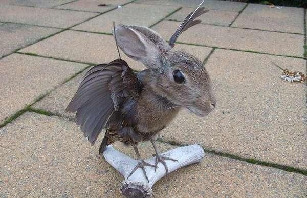Count Bunnicula  This weird rabbit-bird hybrid really just makes us think of a fuzzier slightly cuter version of a bat. Someone probably paid big bucks to have this masterpiece commissioned.