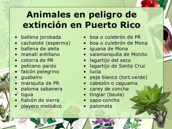 animales en peligro de extincion en puerto rico unit 2