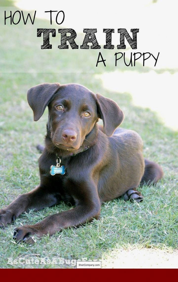 Forceful Dog Lovers Resource Dog Training Training Your Puppy