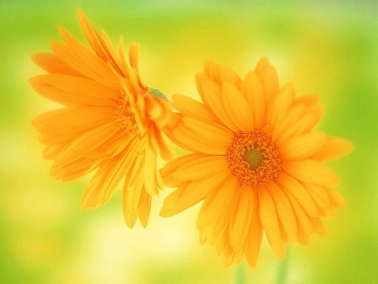 For flower lovers flowers desktop wallpapers with small birds 2 ...