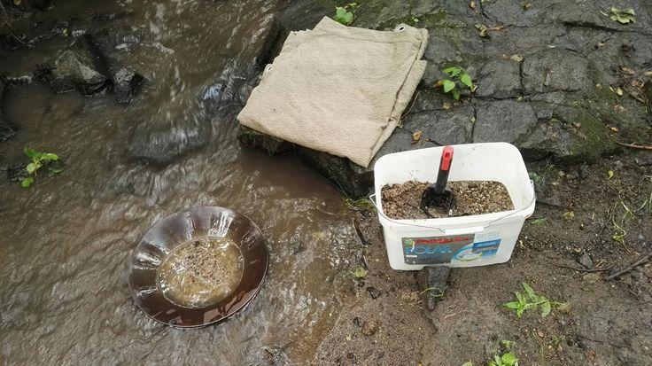 Rýžování zlata na potoku