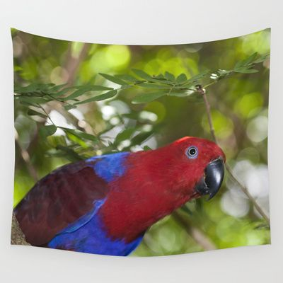 Eclectus Parrot by Deborah Janke