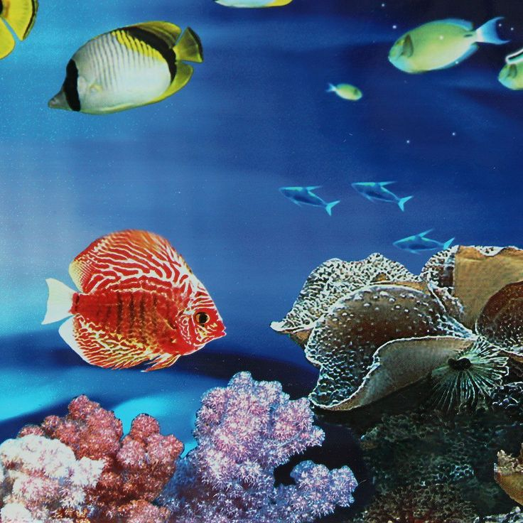 17 Best Ideas About Aquarium Backgrounds On Pinterest