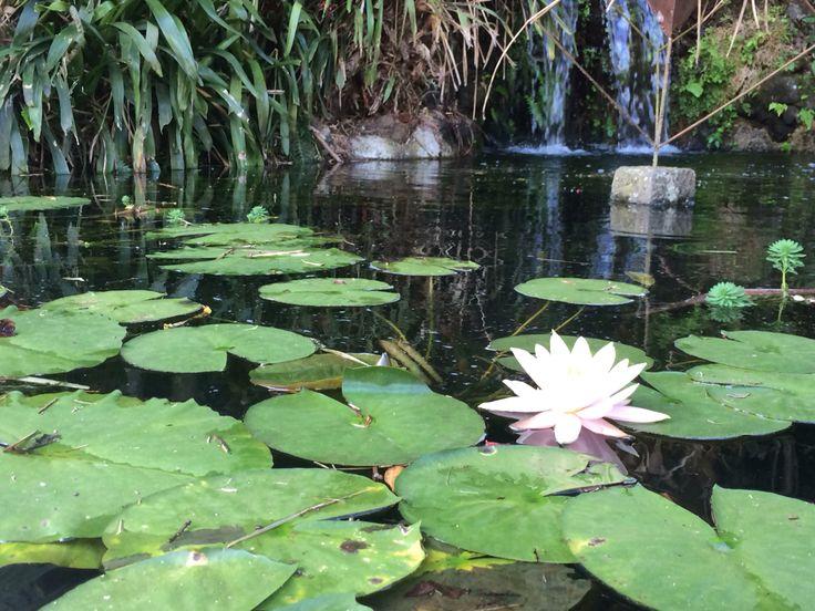 17 best images about art waterlilies on pinterest for Jardin lankester