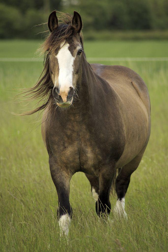 horseheaven:  Gail Rajgor on Flickr - Tilly