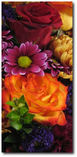 fall colors: Pretty Flowers, Beautiful Flowers, Autumn Colours, Fall Gorgeous, Autumn Colors, Garden, Color Combination