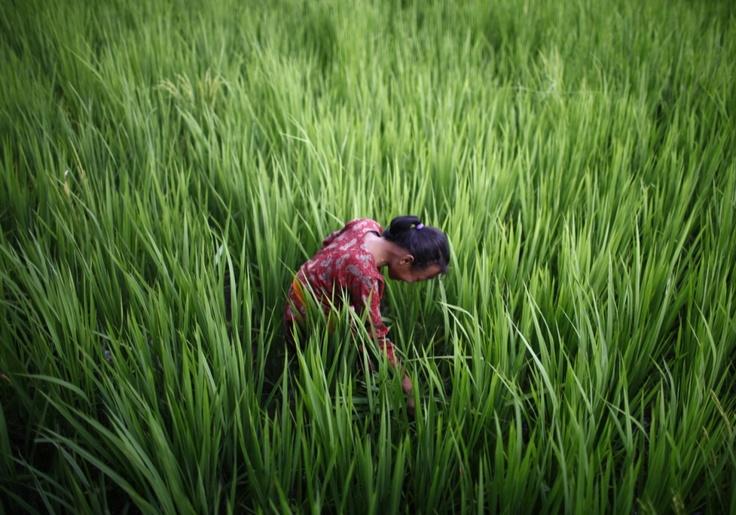 Katmandu.  (photography: AP)