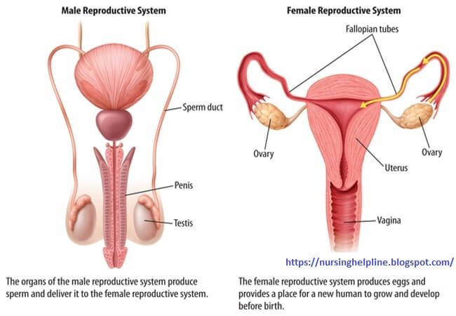 Female reproduction interactive health