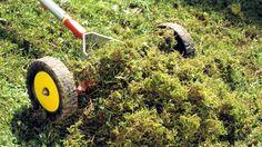 Gegen Moos im Rasen empfiehlt der Handel oft Eisendünger. Doch dieser kann gesundheitsschädlich sein und schafft kaum Abhilfe. Langfristig hilft nur die Ursachenbekämpfung.