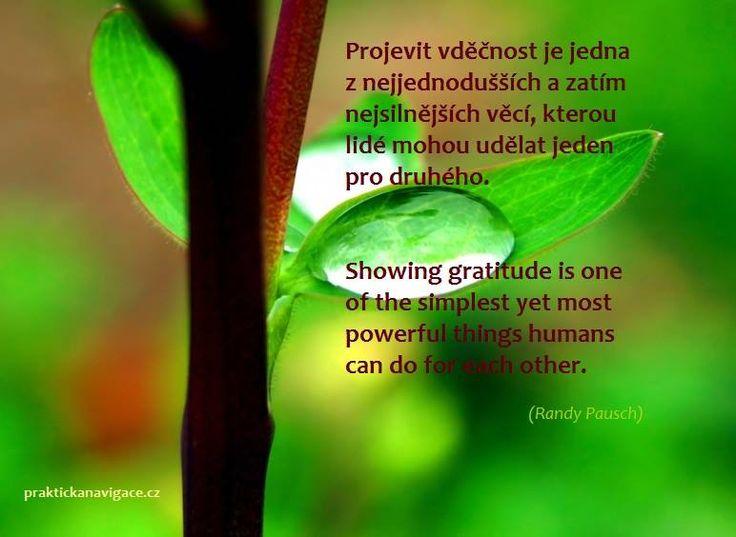 Vděčnost/Gratitude.