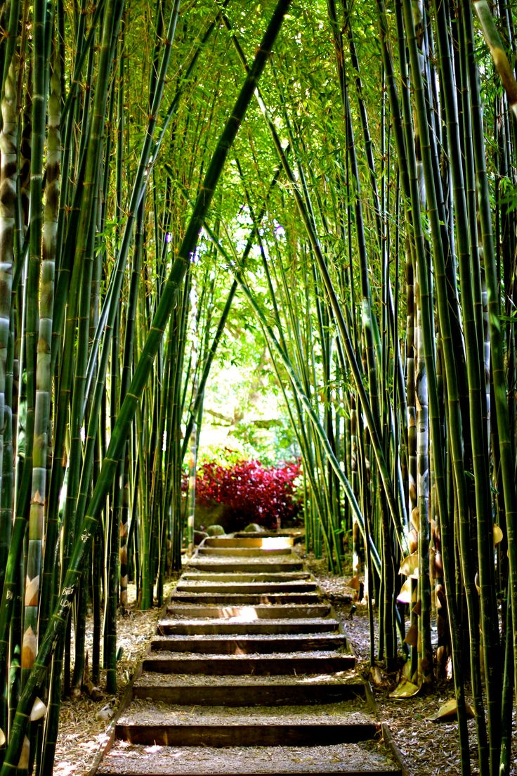 Crystal Palace, Byron Bay - this place is worth a second trip!