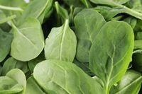 How to Germinate Spinach Seeds | eHow