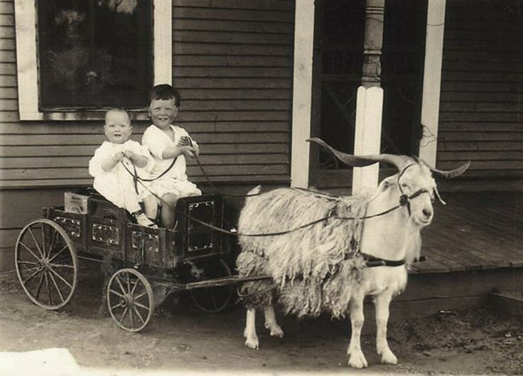 Animals Pulling Wagon : Best images about animals what pull carts on pinterest
