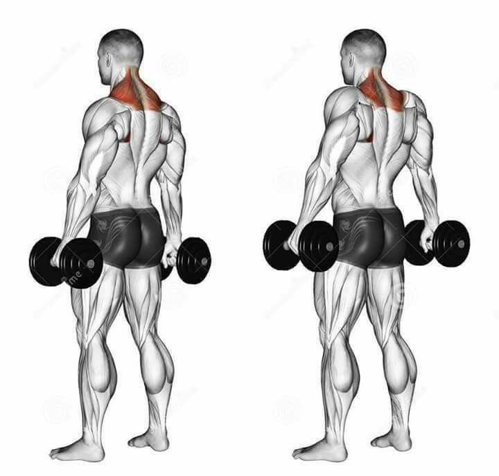Dumbbell Chest Workouts For Men: 17 Best Images About Deadlift To Overhead Press On