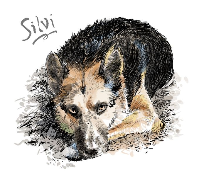 """""""...Death came. For months, your spirit lingered, morning and dusk. A flimsy silvan shadow shaved the edge of a glance. I recognized that dust: The dog who'd never heed the go in ghost."""" - from """"Hounds of Wonder: A Life In Rescue Dogs"""" by B.D. Love. Illustrations by Walt Taylor"""