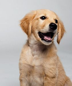 homemade puppy food recipe is what YOUR puppy is yearning for! Every pup can grow into a top dog.