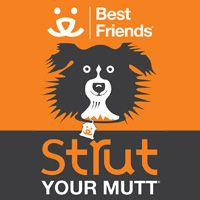 Join Best Friends Animal Society's, Strut Your Mutt, to Raise Funds For a Shelter or Rescue in Your Area