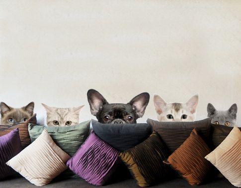 Muursticker 273 katten met puppy ogen hond