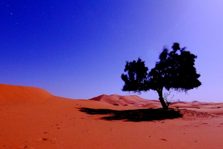 Notte rischiarata dalla luna, questo albero solitario resiste al vento freddo, l'immagine sembra di giorno ma... non lo è!