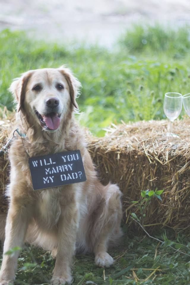He proposed with his dog at the same place he asked her to be his girlfriend 5 years ago!