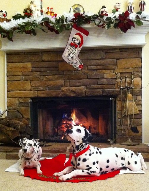 Pictures of Christmas Dogs