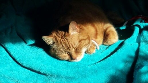 Sunbathing kitty