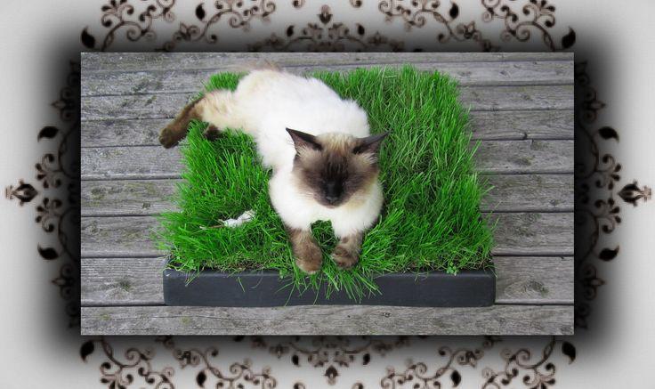 DIY  Chill Out Zone aus Katzengras - Einfach zum Kotzen!
