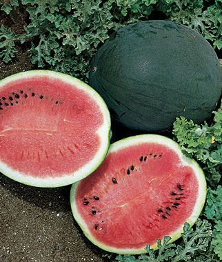 Bush Sugar Baby Watermelon Seeds and Plants, Fruit and Vegetable Seeds at Burpee.com