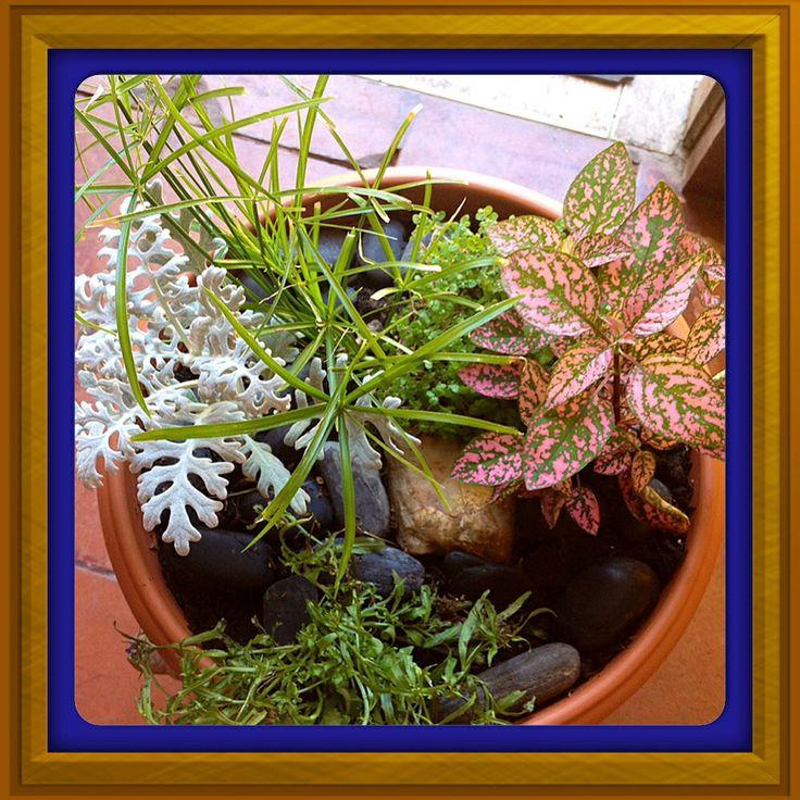 Más plantas